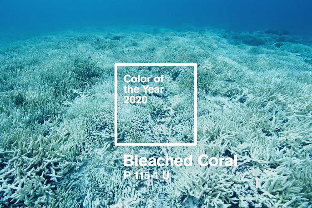 colore dell'anno 2020 bleached coral
